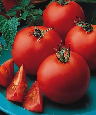 Organic Vegetable - Tomato - Matina - 700 Seeds - Bulk