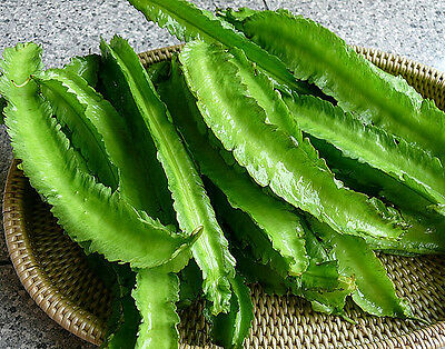 BEAN 'Winged' 10 seeds asian vegetable garden goa HUMID asparagus pea UNUSUAL