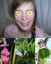 3 Sorten Samen-Sortiment schneIIwüchsige winterharte Bananen-Palmen