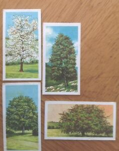 4-Brooke-Bond-cards-Trees-in-Britain-series-numbers-21-039-25-27-and-31