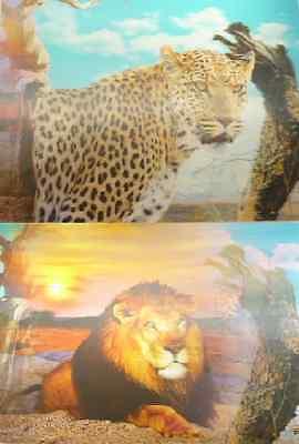 D 1 X 25x35cm 3D Flicker Lenticular Picture Leopard And Lion PM279