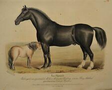 Lithographie XIXème Couleur et Gommée - Cheval Clydesdale et Poney Schetland