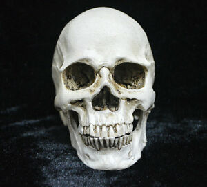 Realistic-Human-Skull-Head-Resin-Halloween-Haunt-Stage-Prop-Decoration-Medical