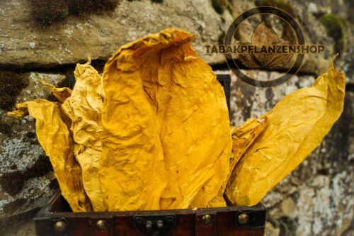 Tabak, Tabakpflanzen Tabakblätter /'/'Virginia GOLD/'/' 500g Premium Qualität