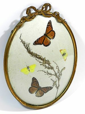 Vintage Real Butterflies Butterfly Framed Convex Glass
