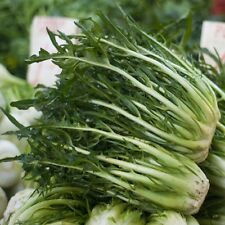 Chicory Catalogna Frastagliata - Italian Type - Appx 750 seeds - Vegetables