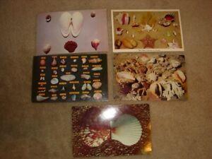 Sea-Shells-Lot-of-5-Vintage-Postcards