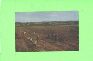 F-POSTCARD-HARVESTING-POTATOS-IN-MAINE-MEN-AND-TRACTOR-AT-WORK