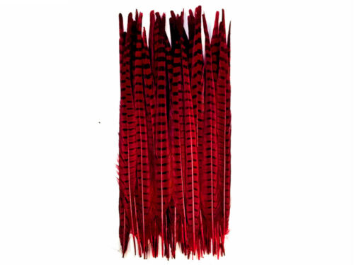 10 Pieces -20-22 Red Wine Dyed Over Natural Long Ringneck Pheasant Tail Feather