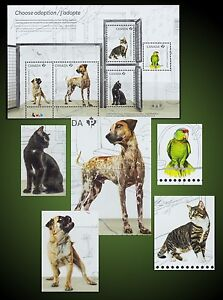 DOGS PUG PUPPY GERMAN SHORTHAIRED POINTER CATS AMERICAN SHORTHAIR BOMBAY PARROT