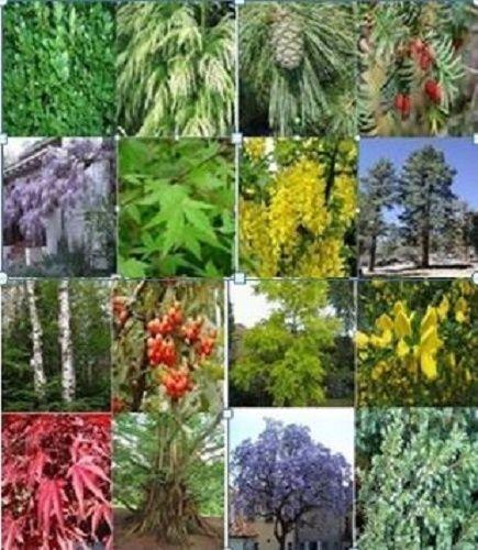 3 semi da 16 Varietà di Alberi singolarmente etichettati. 48 semi misti