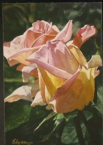 Original-Ltd-Edition-Giclee-By-Elyse-Cohen-2-Peach-Faced-Roses