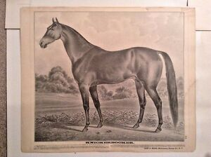 Knickerbocker - Rare 1875 Horse Lithograph Print Racing Style Of Currier & Ives