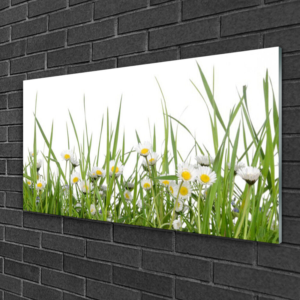 Glass print Wall art 100x50 Image Picture Grass Daisies Nature