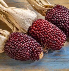 Seedeo ® Erdbeermais, Popcornmais (zea Mays Japonica) Environ 20 Graines Bio-afficher Le Titre D'origine