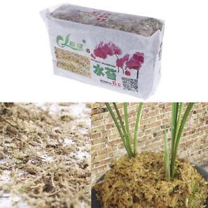 Sphagnum-Moss-feuchtigkeitsspendender-organischer-Duenger-Orchidee-Phalaenopsis