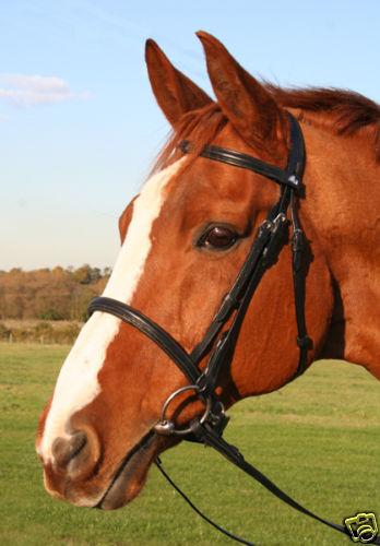 bargain ! New  Black padded noseband  English leather snaffle bridle full size