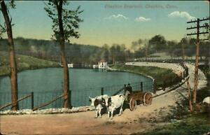 Cheshire-CT-Oxen-Wagon-at-Resevoir-c1910-Postcard