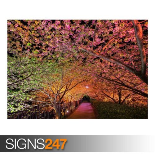 Photo Picture Poster Print Art A0 to A4 NATURE POSTER TUNNEL OF LOVE AE065