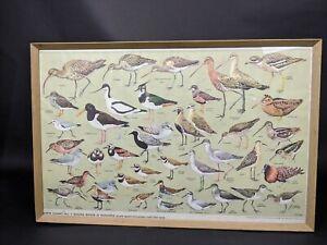 RSPB-Chart-No-7-Shore-Birds-amp-Waders-Print-amp-Framed-VRAH722004