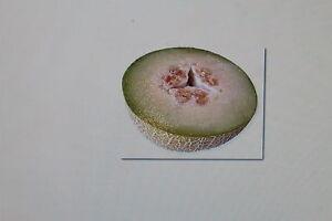 Discipliné 10 Graines Miel Melon, Melon, Sucre Melon #258-lone,zuckermelone#258 Fr-fr Afficher Le Titre D'origine AgréAble Au Palais