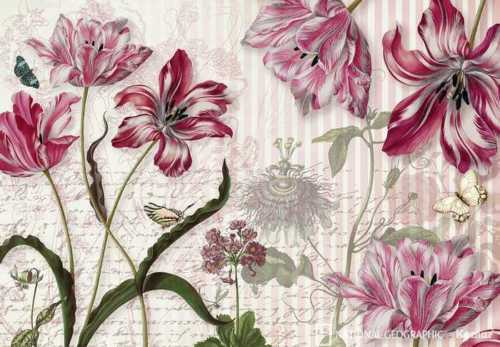 Fototapete National Geographics MERIAN 368x254cm rosa-rote Skizzen Blüten Falter