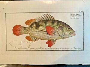 1st-EDITION-BLOCH-OBLONG-FOLIO-H-C-RARE-FISH-THE-JOHNS-GRUNT-318