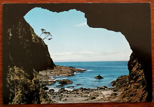 Cape-Reinga-Spirit-Tree-from-Spirit-Cave-Northland-New-Zealand-Post-Card