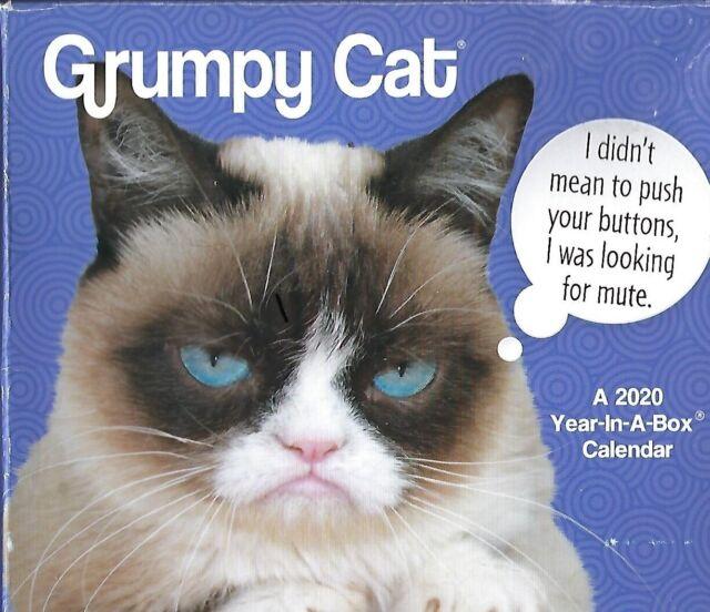 Grumpy Cat 2020 Year in a Box Calendar All Memes for Each ...