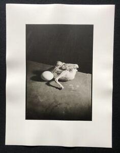 Wols, oeuf......... fonte Surprise!, Parigi 1939, fotografia da eredità, 1981