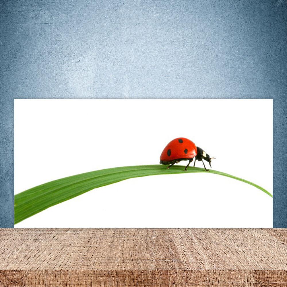 Vidrio Templado Cocina salpicaduras 100x50 Ladybug Floral