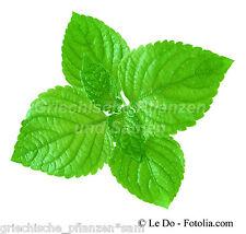 PERILLA grün * 50 Samen * SEHR SELTEN * Shiso * Gewürz Kräuter Gemüsepflanze