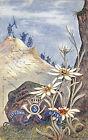 8314) 5 REGGIMENTO ALPINI 55 COMPAGNIA VIAGGIATA NEL 1904 DA BERGAMO.