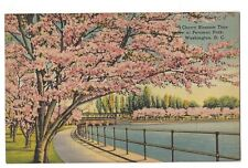 CHERRY BLOSSOM Spring Time at POTOMAC PARK Washington DC Postcard Linen 1943
