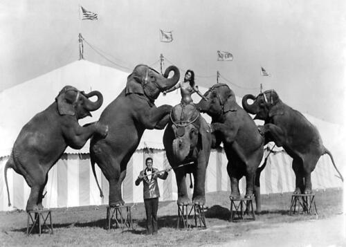 Clyde Betty /& Cole Bros Antique Photo.. Circus Elephants .. Photo Print 5x7