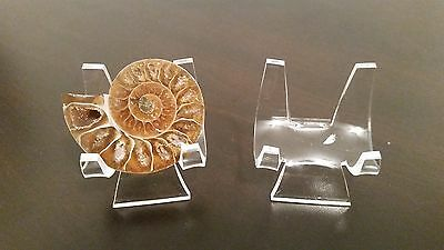 "~12 Premium 3/"" Display Stand Easel Ammonite Goniatite Meteorite Tektite"