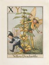 Flower Fairies: Alphabet X Y Yellow Deadnettle Vintage Print Cicely Mary Barker