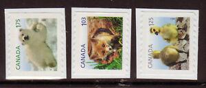 Kanada-2011-Baby-Wildtiere-Set-Mit-3-Broschuere-Briefmarken-Um