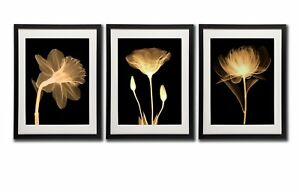 Black white and gold wall art canvas prints decor framed flowers image is loading black white and gold wall art canvas prints mightylinksfo