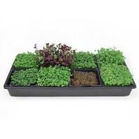 Sectional Hydroponic Microgreens Growing Kit - Grow Indoor Garden Micro Greens