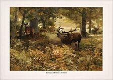 Immagine CACCIA AUTUNNO HIRSCH Wild nel Regno foresta fac simili 368 su carta cartoni