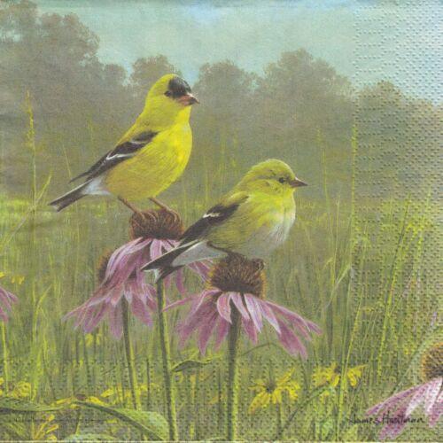 ASHDENE Australien gelbe Vögel DD4-10 2 Lunch Papier Servietten Napkins