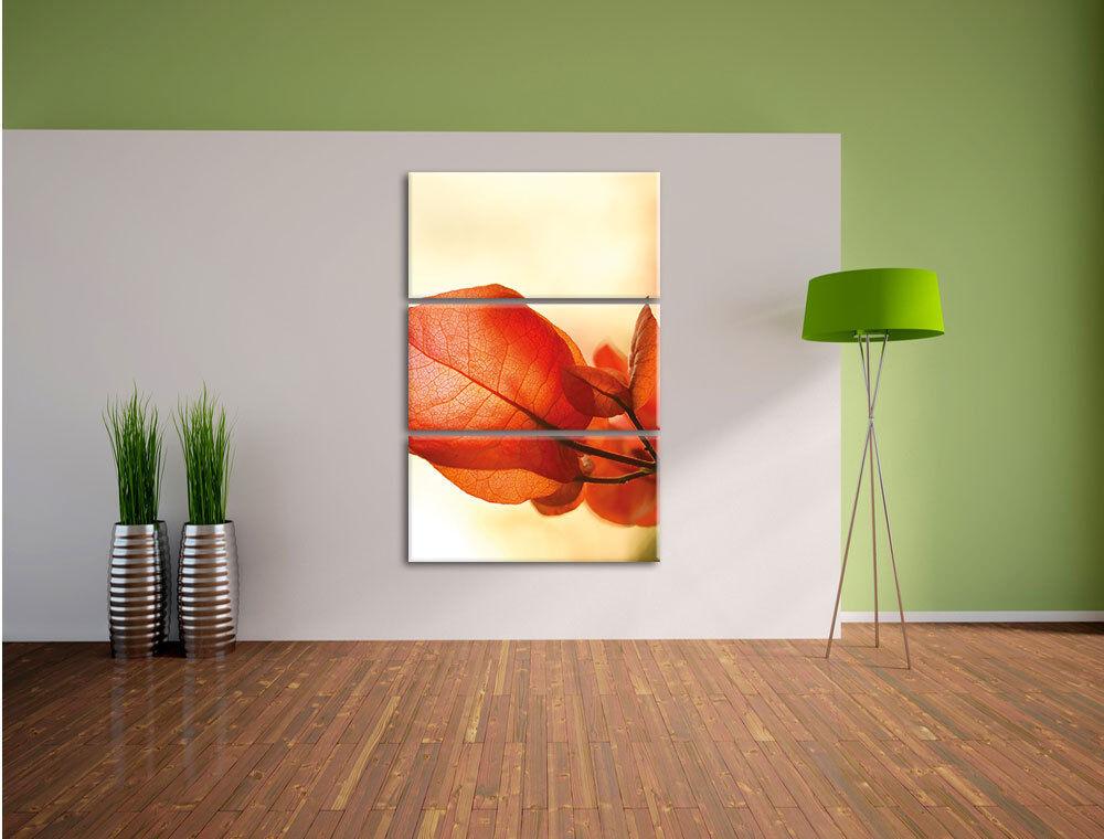 Rayo de Sol en las Foto Flores 3-Teiler Foto las Lienzo Decoración Pa rojo  Impresión 9900c1