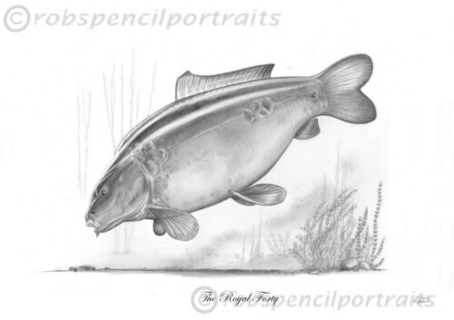 MARY/'S MATE Famous Wraysbury Carp legends Pencil Drawing Art Print Picture