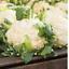 CHOU FLEUR BOULE DE NEIGE-graines potagères-Jardin Familial Graines