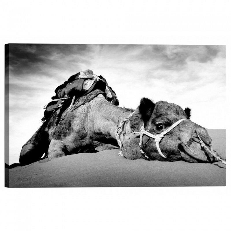 Quadro Stampa nel su Tela con Telaio Cammello nel Stampa Deserto 5202b5