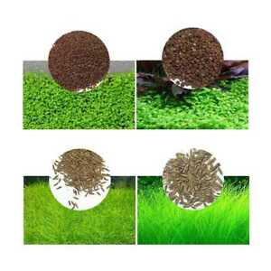 Aquarium-Grassamen-Wasser-Wasserpflanze-Pflanzen-Samen-Aquatic-Aussaat-Seed-X3C2