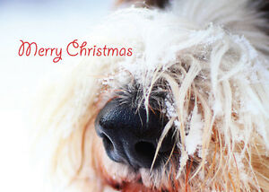 Christmas-Card-DOG-Unique-10-Pack-2-Styles-A6-Size-NEW-SPANIEL-LABRADOODLE-PUPPY