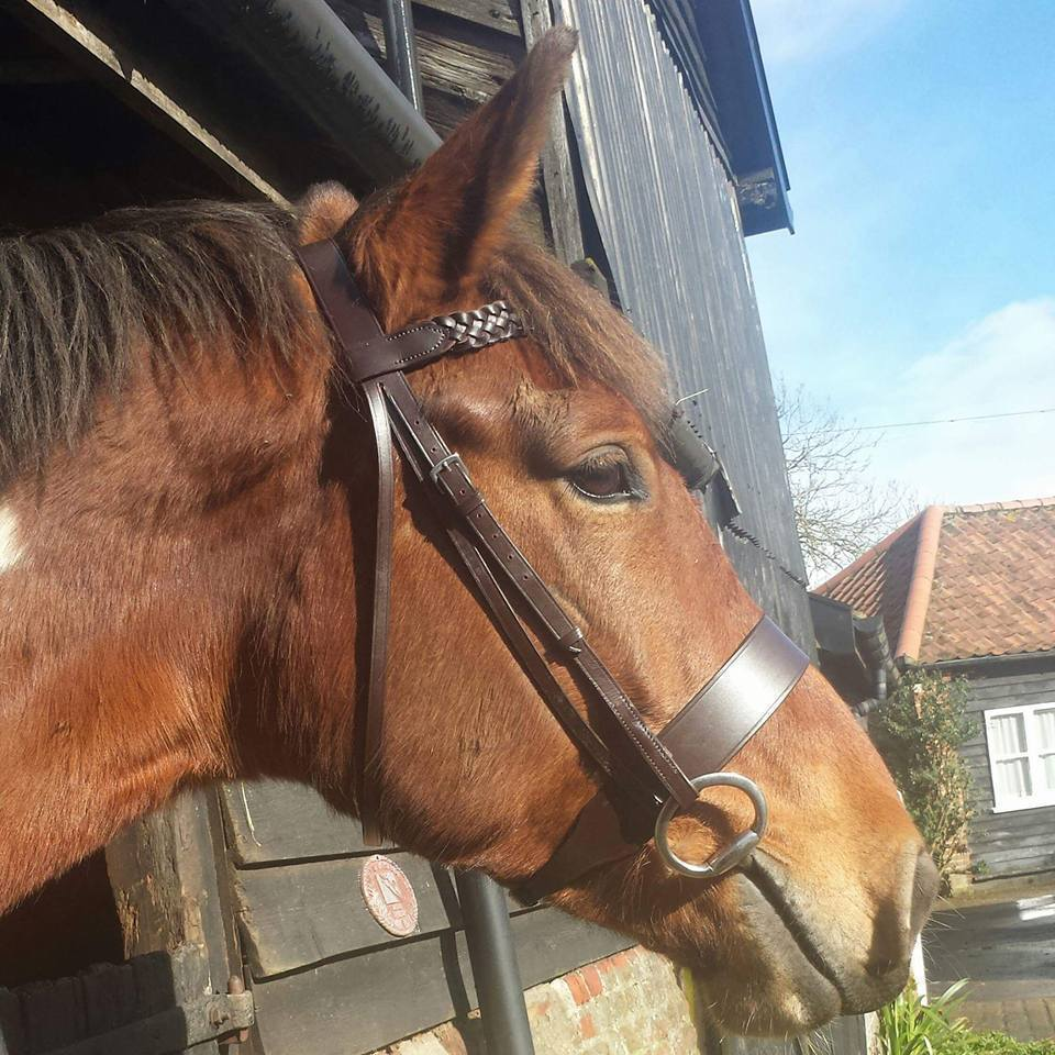 Equipride Plaited Working Hunter Bridle 2