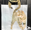 Tabby-Cat-novelty-tail-handle-shopping-tote-carrier-bag-for-life-2-side-print